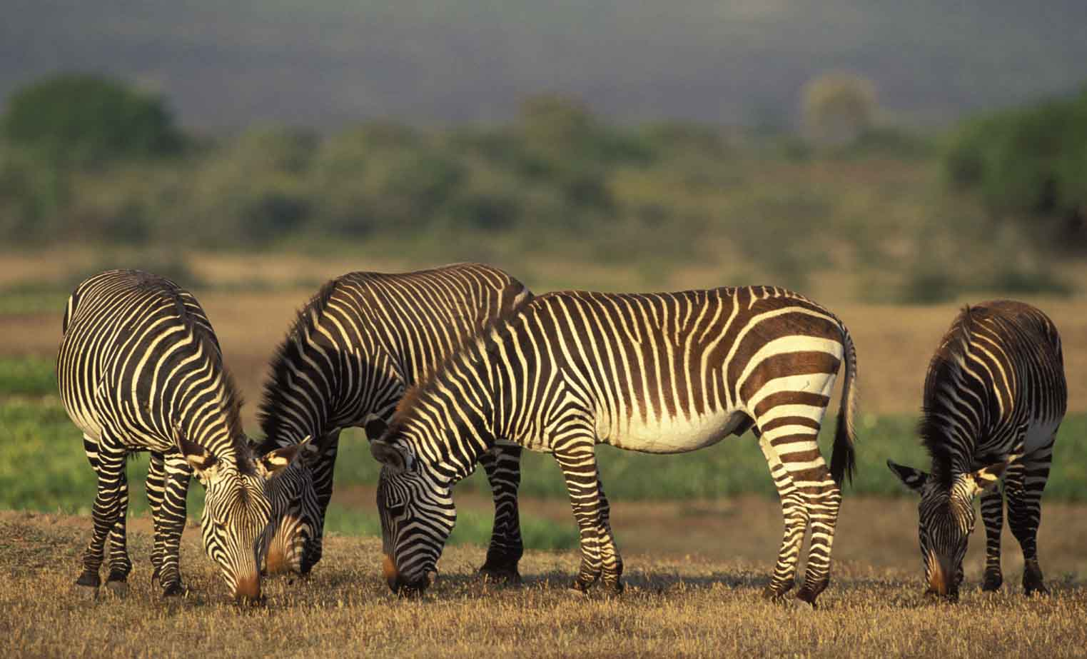 African mountain animals - South Africa