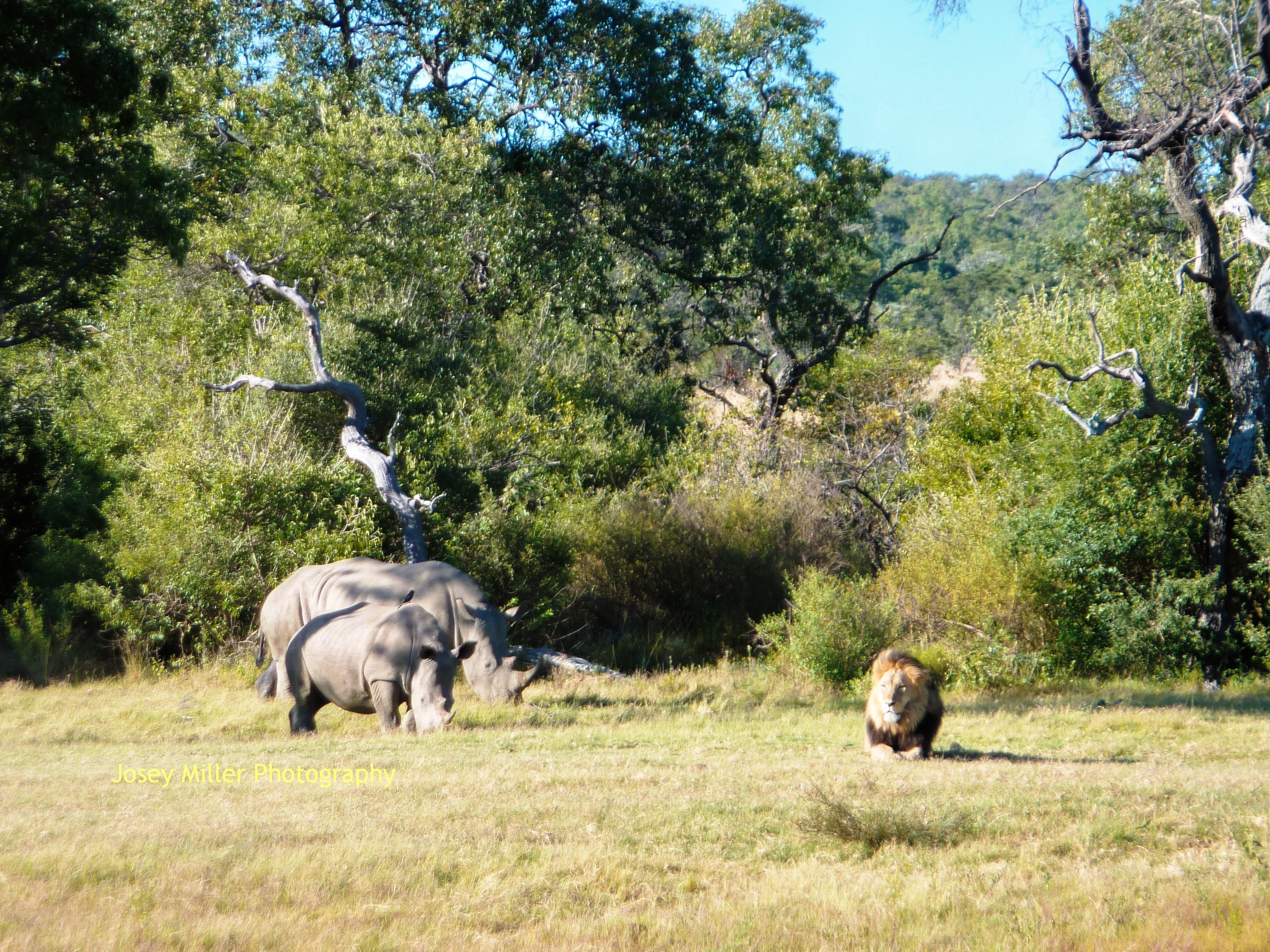 Private Safaris and Adventure Tour to South Africa | The Journeys